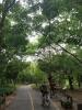 Thaïlande - Une journée dans le poumon vert de Bangkok