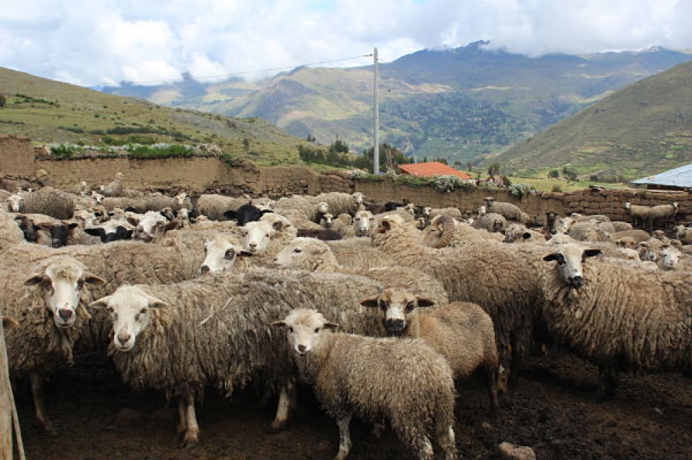 Pérou - Bergerie, pastoralisme et randonnée à Chahuaytire