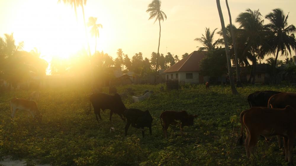 Tanzanie - Expérience villageoise et nuits chez l'habitant à Jambiani