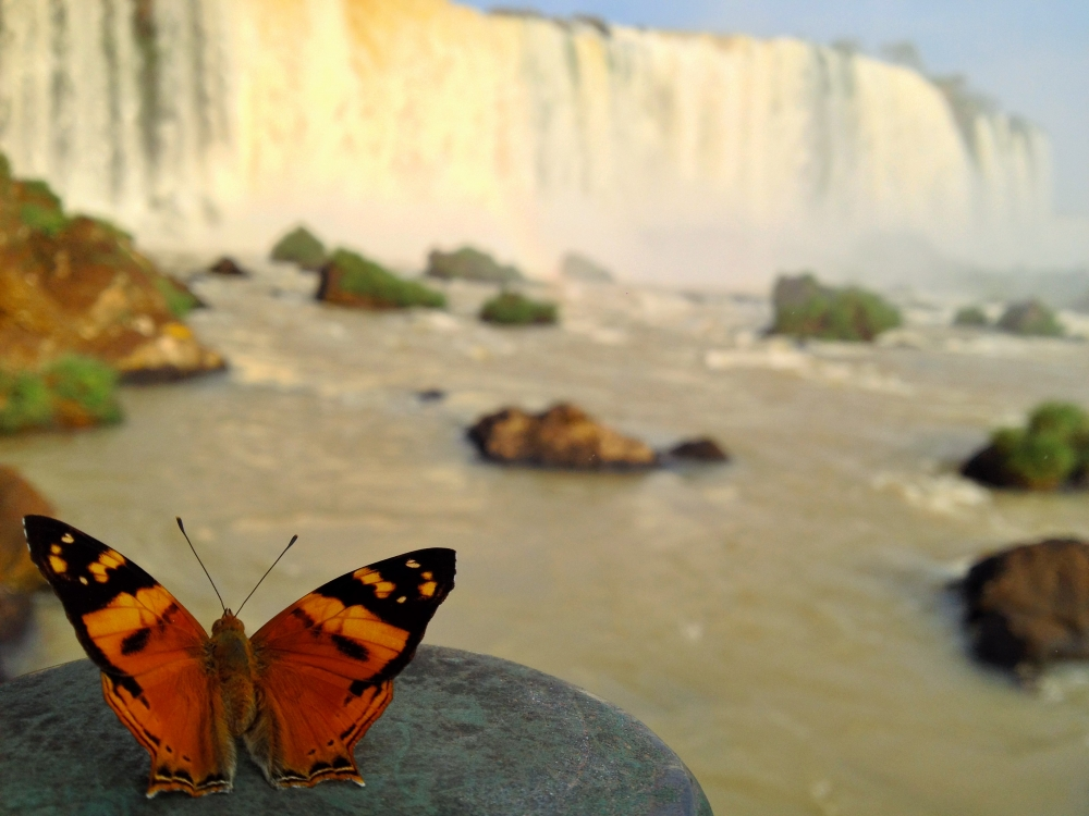 Argentine - Ecolodge, Jungle & Chutes d'Iguazu