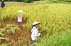 Vietnam - Trek dans le Haut Tonkin à travers le massif du Tay Con Linh depuis Hanoi