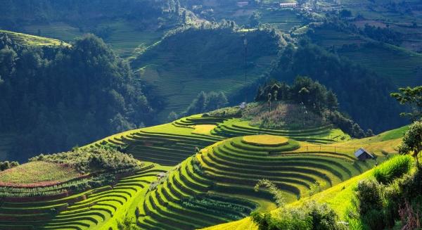 paysage rizière voyage vietnam
