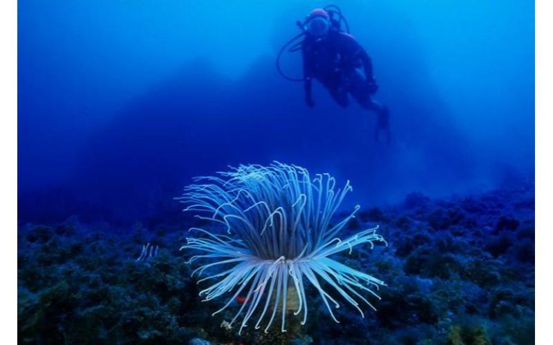 Kos Diving: 5-hour Kos Scuba Diving Class for Beginners