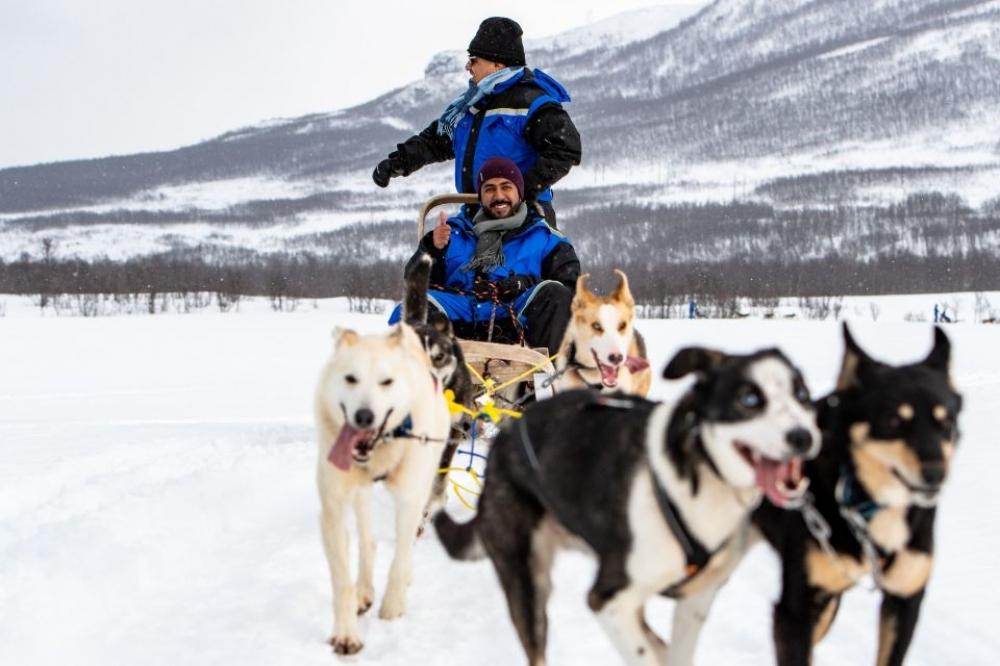 Tromsø: Dog sledding Morning Ride Adventure