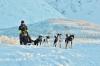 Dog Sledding Evening Adventure from Tromsø
