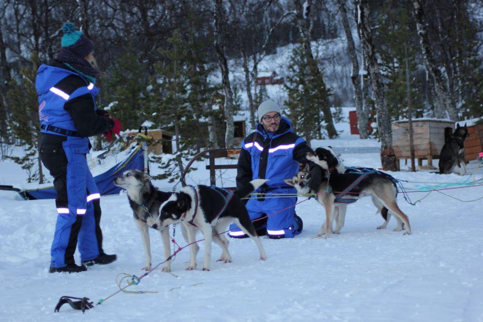 Arctic Dog Sledding Ride Adventure from Tromsø