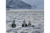 Fjord Cruise and Whale Safari Boat Tour from Tromso