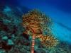 Santorini Diving - Discover Scuba Diving  Course ( 2 dives)