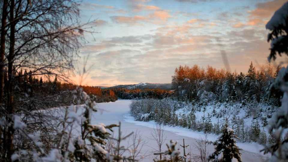 Rovaniemi Hiking: Half-day Hiking Tour around Vikaköngäs