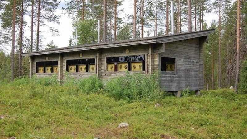Rovaniemi Tour: Bear Watching & Oulanga National Park Experience