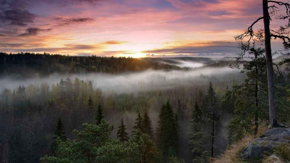 Lapland Day trip: Mushrooms & Berries Foraging, Fishing & Arctic Sauna from Rovaniemi