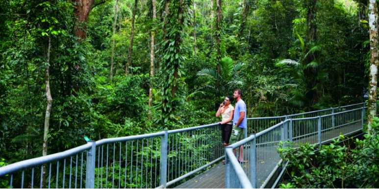 Daintree Rainforest & Cape Tribulation Full-Day Tour from Cairns