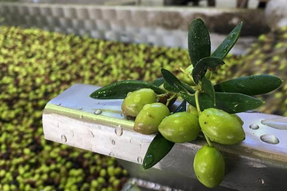 Crete: Vassilakis Estate Free Olive Oil Tour
