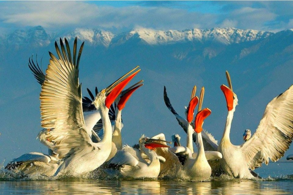 Lake Kerkini Bird Watching Boat Trip