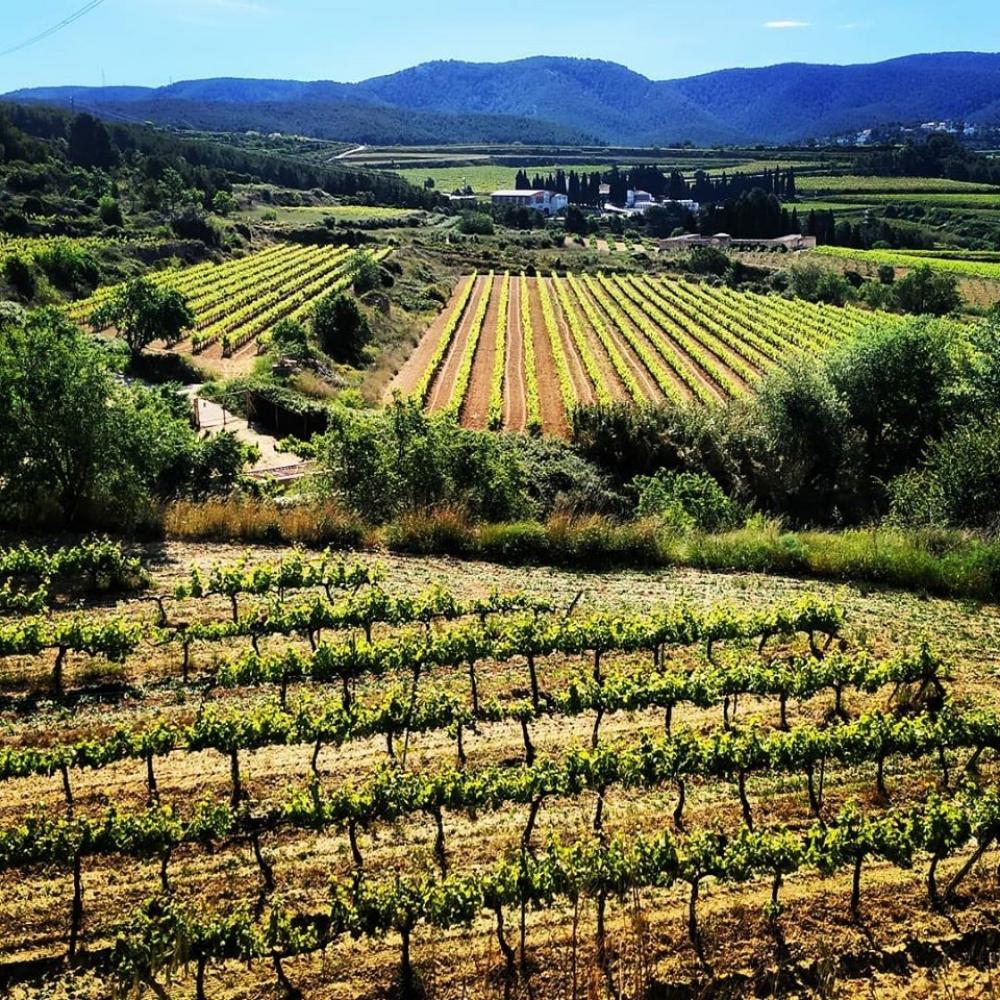 From Barcelona: El Penedès Hike & Wine Tasting Tour - 2020