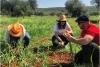 Best Wine Tasting Experience in Greece: Eumelia Organic Farm