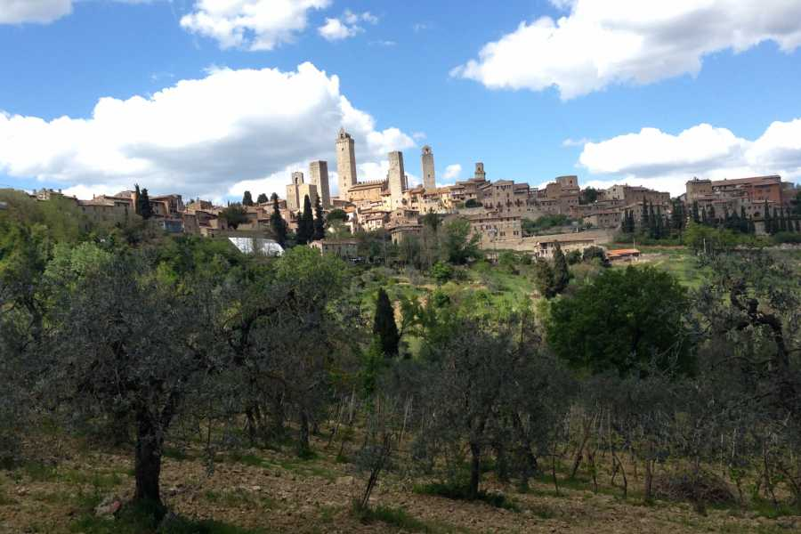From Florence: Private San Gimignano and Wine Tasting Full-day Tour