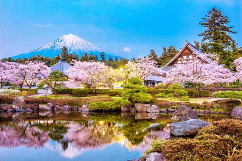 Mt Fuji Full-Day Food Tour by Bullet Train with Lunch