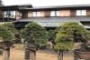 Bonsai Art Experience in Shunkaen Bonsai Museum in Tokyo