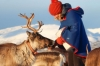From Tromsø Reindeer Sledding Experience with Sami Culture & Lunch