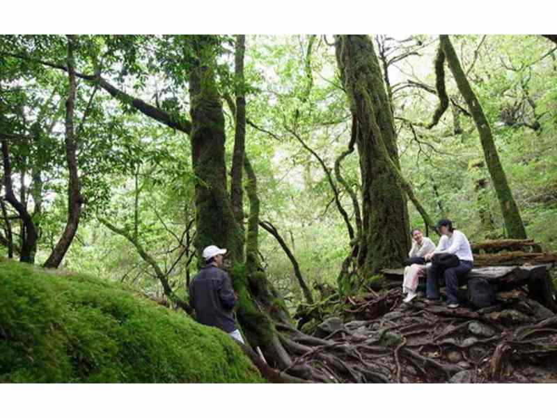 Yakushima Hiking Tour - Shiratani-Unsuikyo Walking Trail