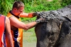 From Chiang Mai: Private Elephant Retirement Park Tour