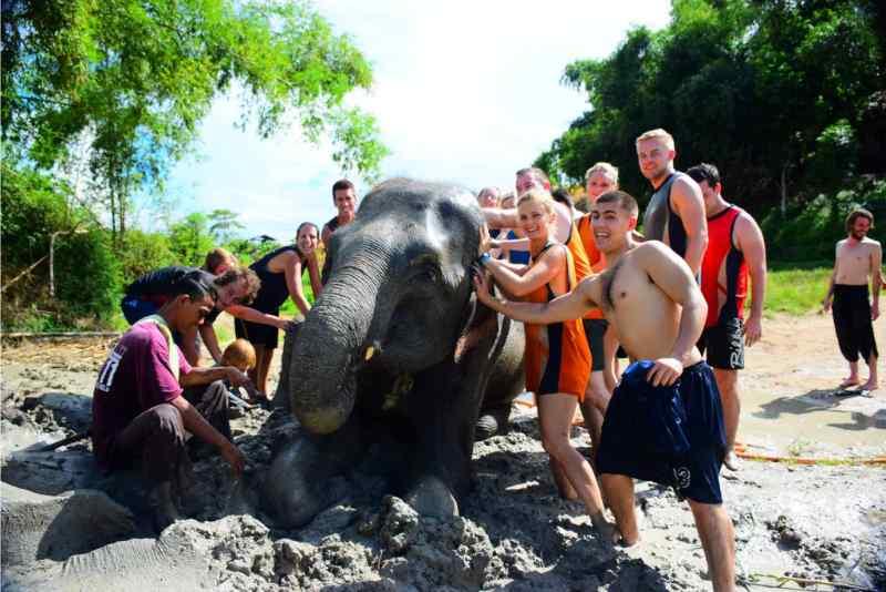 Chiang Mai Elephant Sanctuary Tour