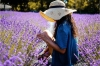 Lavender Day Tour: Small-Group Lavender Day Tour from Avignon
