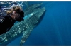 Whale Shark Diving: Full-day Whale Shark Snorkeling in Cabo San Lucas