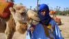 Marrakech Camel Ride and Quad Bike Tour