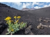 Mount Etna Tour: Half Day Etna Guided Tour from Catania
