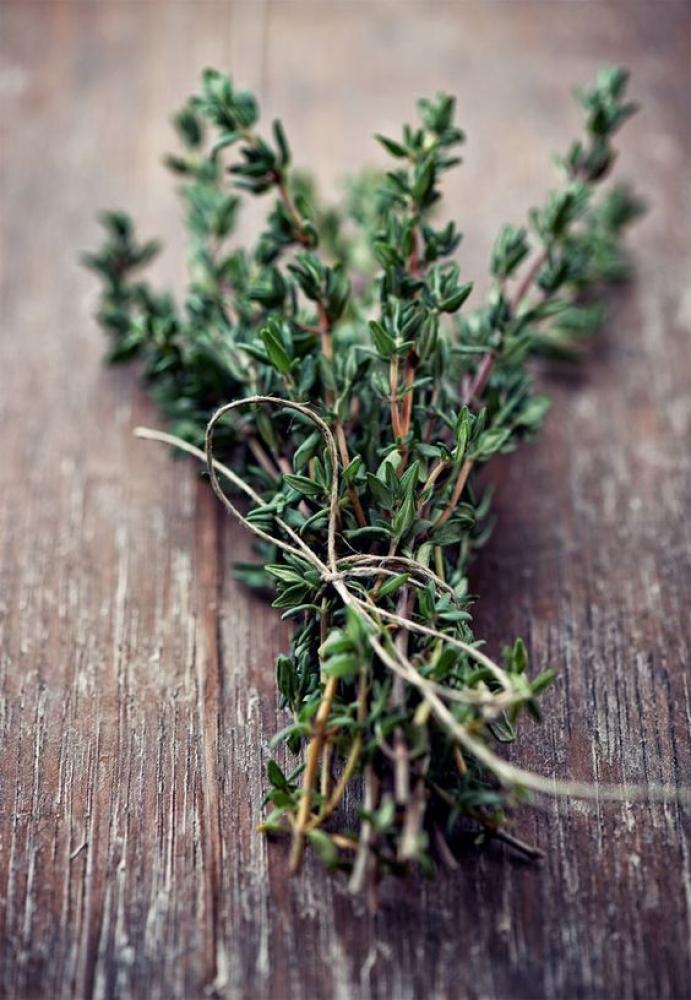 Atelier herboriste - Herbes sauvages & médicinales - 5/12/18