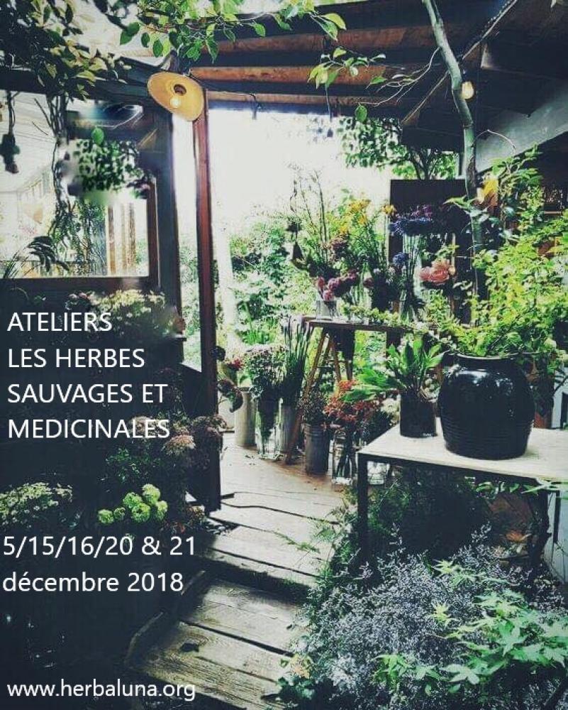 Atelier herboriste - Les huiles parfumées - 15/12/18