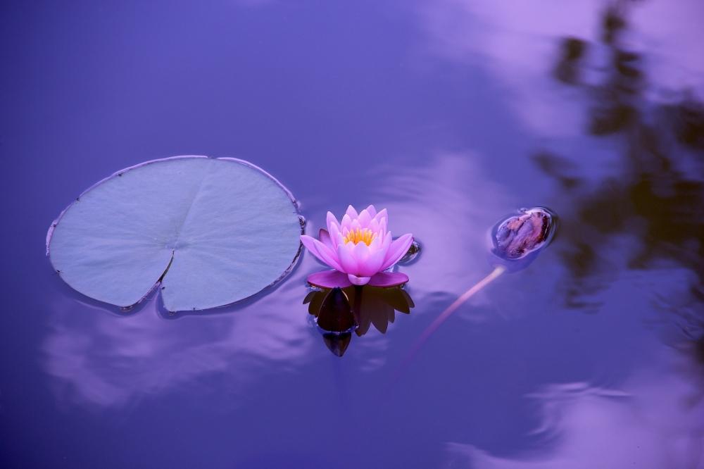 Soirée Zen Harmonisation Sonore