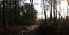 Bain de Forêt en aveugle
