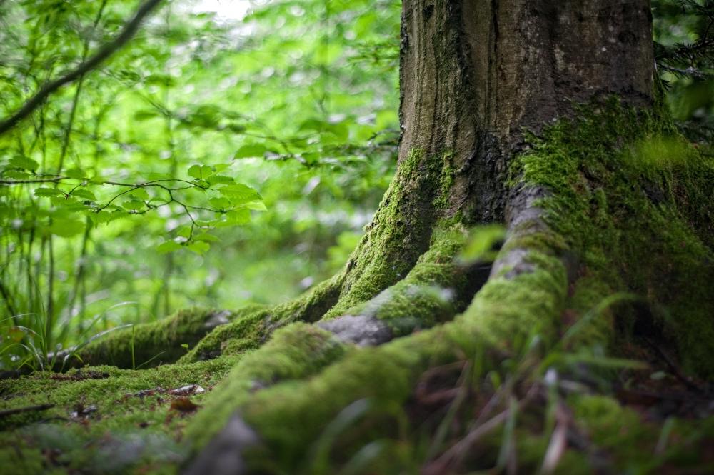 Bain de forêt
