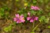 L'âme des plantes - découverte sensorielle et herboristique