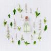 HERBALISME les plantes qui soignent - 19/01/19