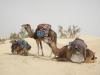 Marche et sophrologie entre femmes dans le désert - à partir du 02/03/19