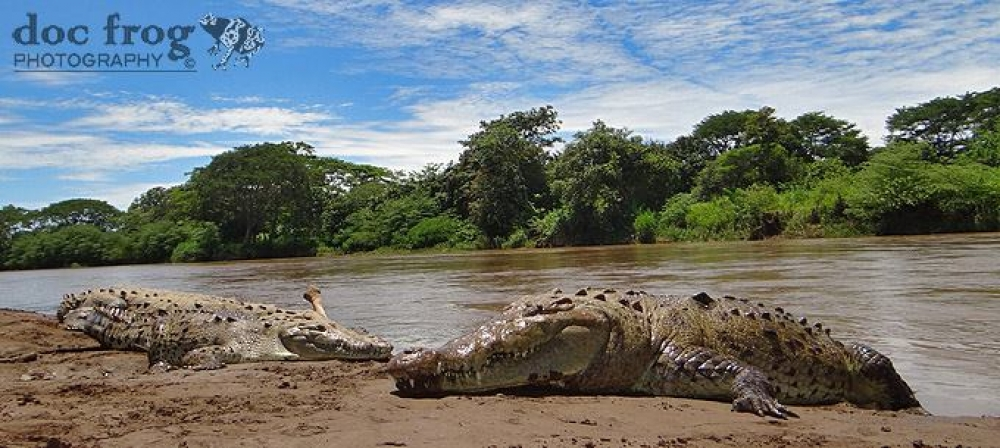 Costa Rica - Explore the deep rainforest of the Pacific side