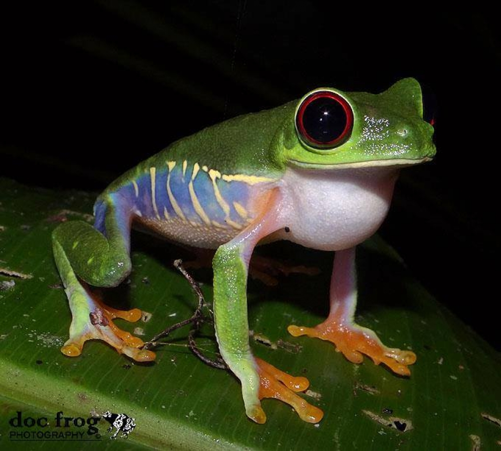 Costa Rica - The Caribbean rainforest: search for typical and strange Central American animals