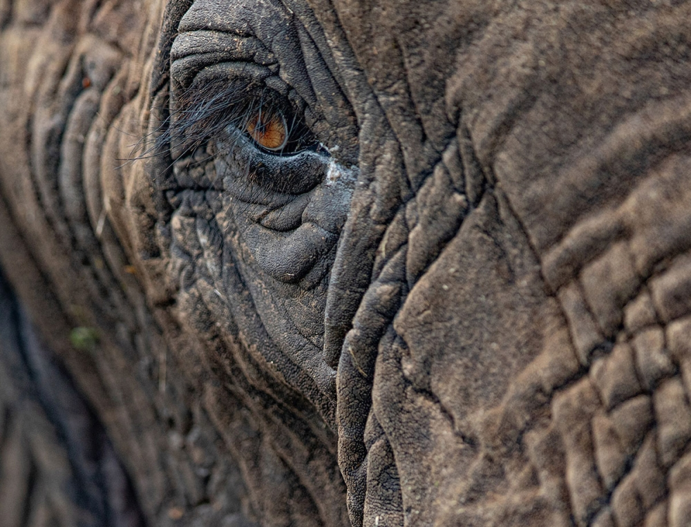 South Africa -  3 Day Big 5 Traditional Camp Safari (Enquire for Availability)
