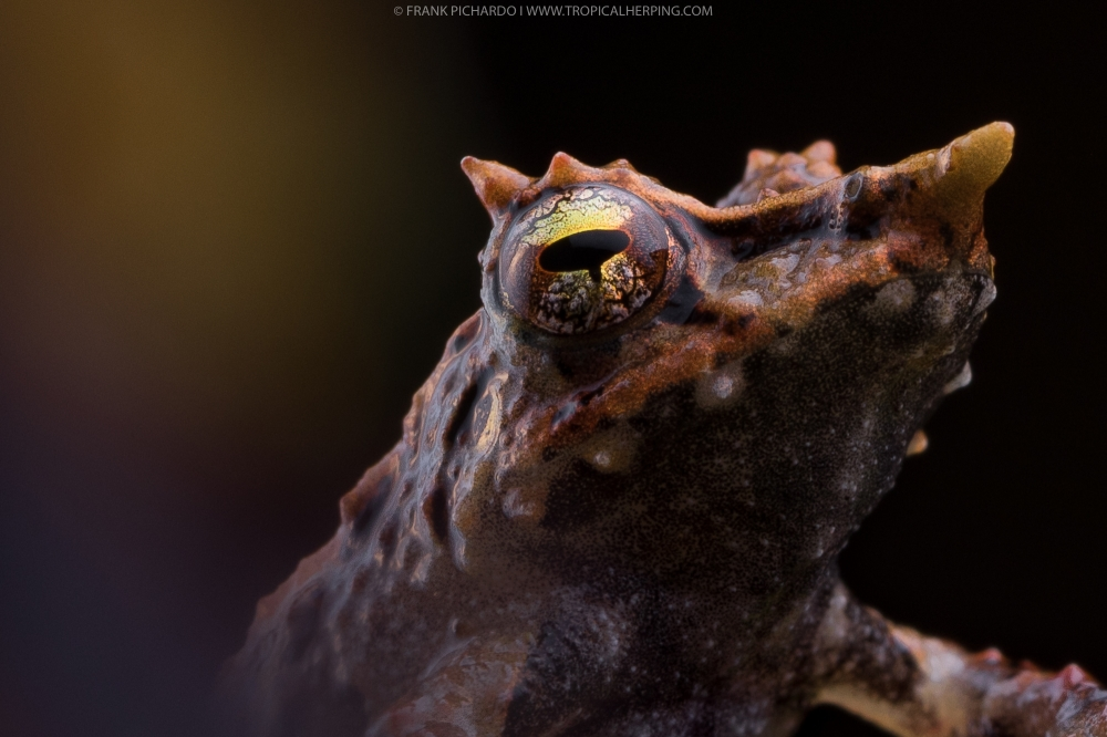 Reptiles and amphibians of Ecuador: Science, photography and ecotourism