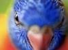 Australian Native Fauna Portraiture