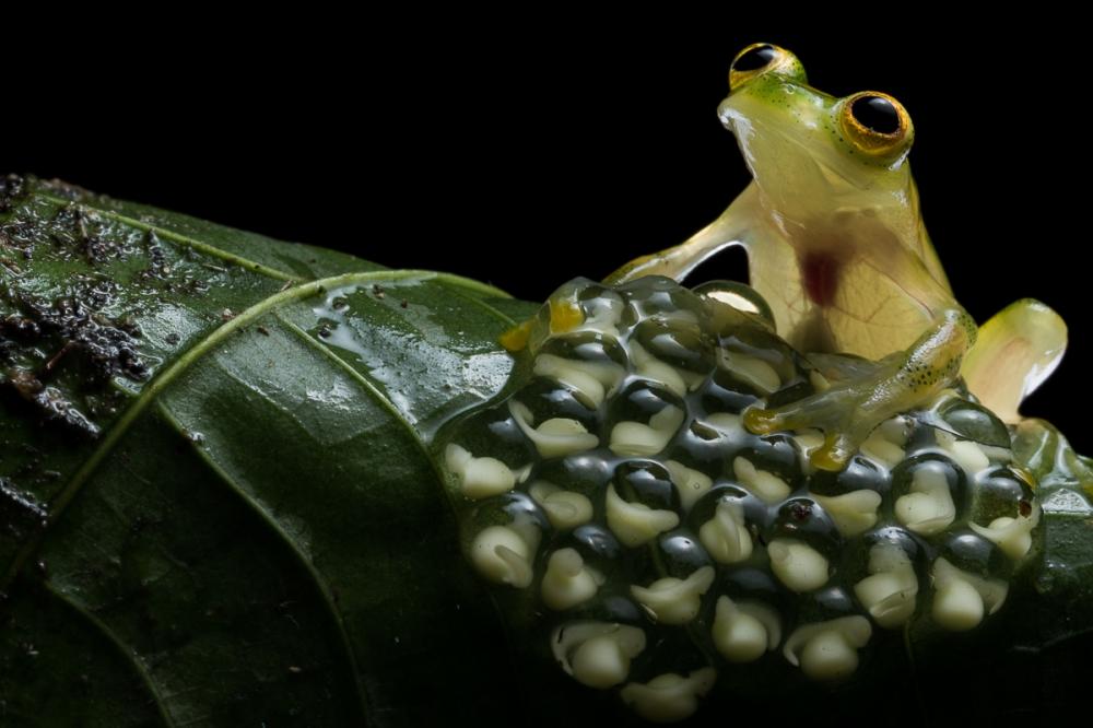 Ecuador - Rainforest macro photography