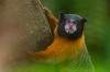 Ecuador - Photo Safari