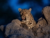 COMPLETED: South Africa | Kgalagadi, Action Photography in a photographers paradise