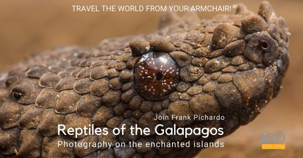 15: October 7th 2021: Reptiles of the Galapagos - Photography on the enchanted islands