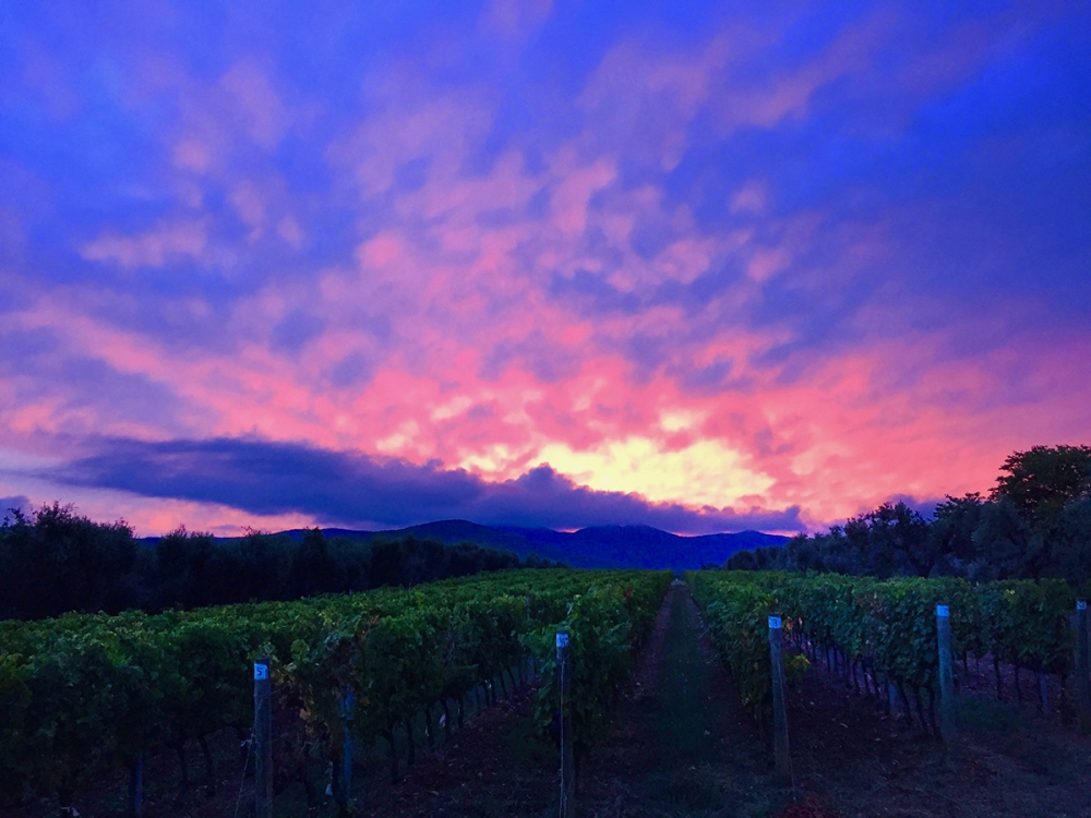 Bolgheri vineyards photo experience