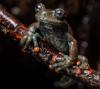 Reptiles of Ecuador and the enchanting islands of the Galapagos